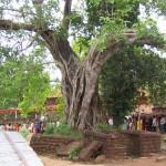 Naga Saanniddhya - Ananthapura Lake Temple