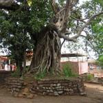 Ananthapura Temple (7)