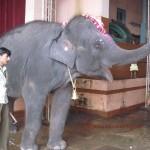 Elephant - Yashaswi