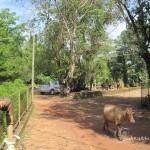 Southadka Shri Mahaganapathi Temple (31)