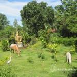Beautiful Garden near the Temple
